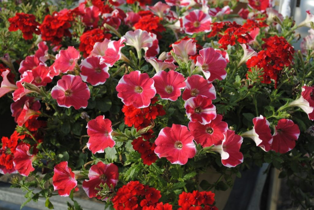 Red Confetti Garden